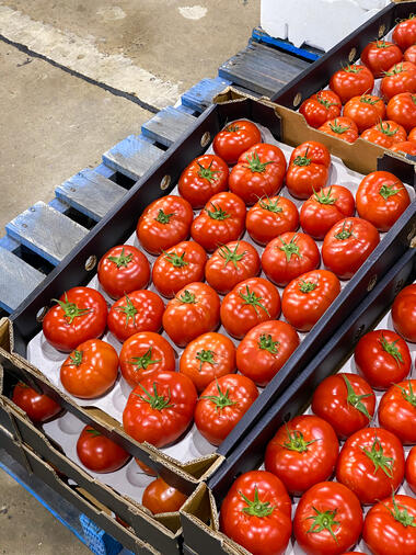 Buy tomatoes in Sydney from MD Provodores on FoodByUs